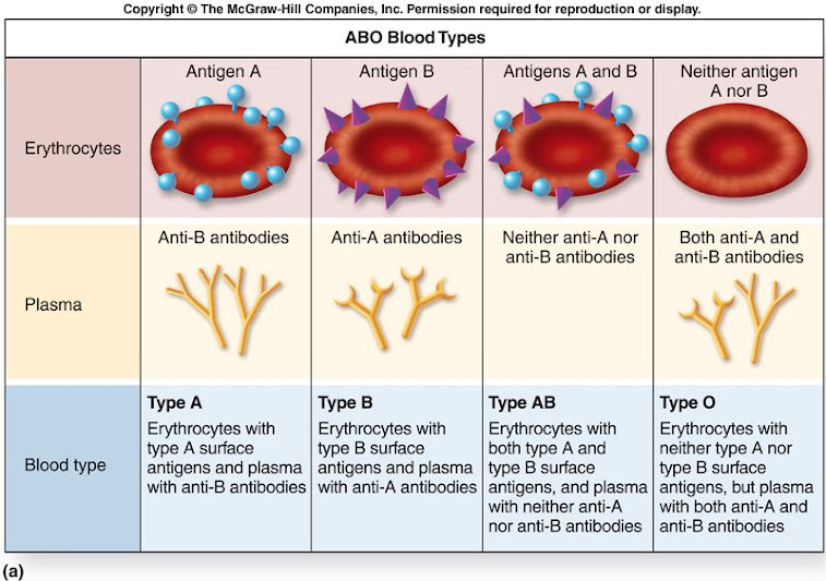 [Hình: f21-7a_abo_blood_types_c.jpg]