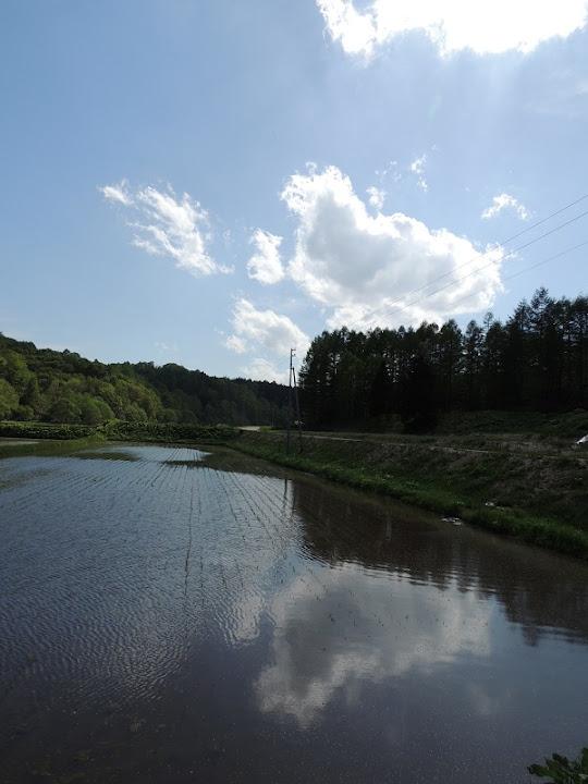 水田に映る雲