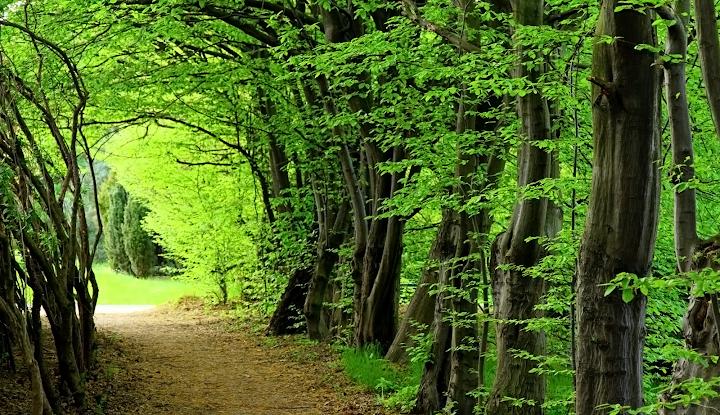 forest greens wallpaper