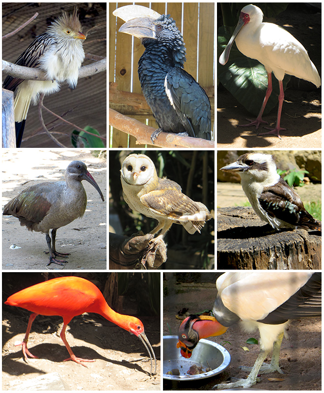 Vogels in Umgeni River Bird Park, Durban - Zuid Afrika