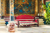 Bali, Nusa Penida island, Nusa Garden Bungalow, Accommodation, guest house, hotel