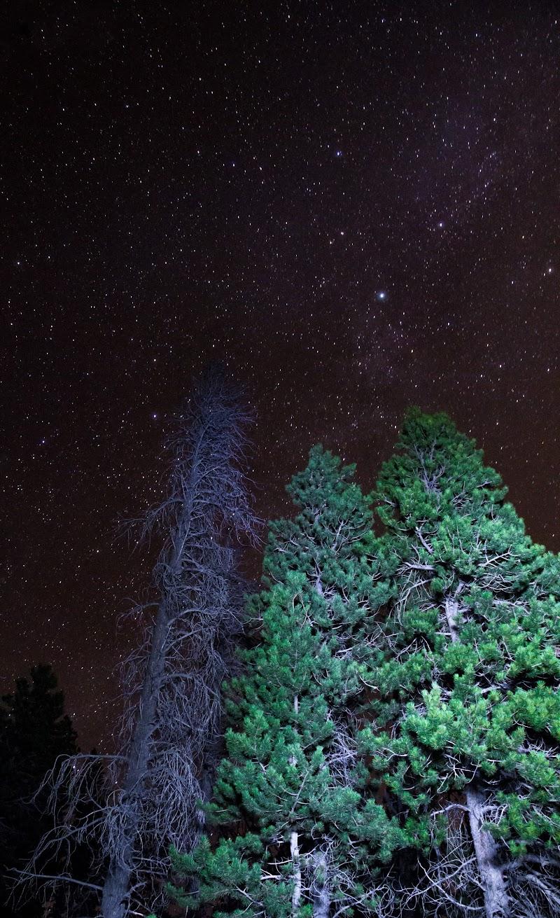 three trees under a star filled night sky