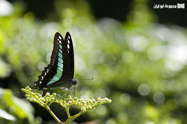 اجمل ملكة جمال الحشرات ؟؟؟؟ D%2520%252817%2529