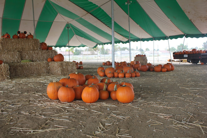 non-profit pumpkin patch