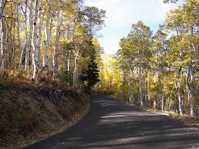 Autumn aspen behind Mt Timpanogos (2010)
