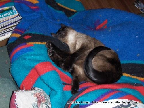 photo of Yum Yum sleeping on a blanket