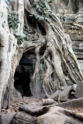 Tree engulfing Ta Prohm temple in Siem Reap Cambodia