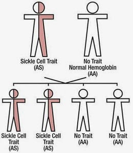 Sickle Cell Disease Vs Sickle Cell Trait What S Your Status