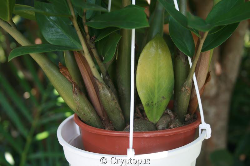 Futur jardin d'orchidées!!! - Page 2 IMG_3702