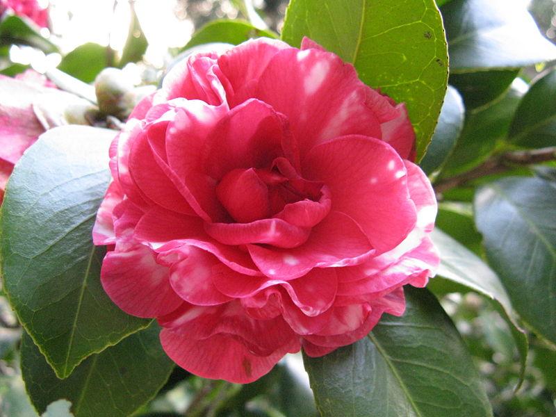 Euphorbia Plants And Flowers Ltd Best Flowering Plants