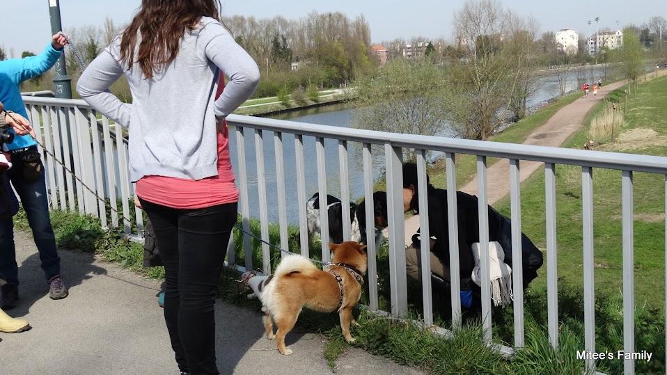 Balades canines en Nord (59)/Pas de Calais (62) - Boulogne-sur-Mer, Calais et Lille - Page 4 DSC01804