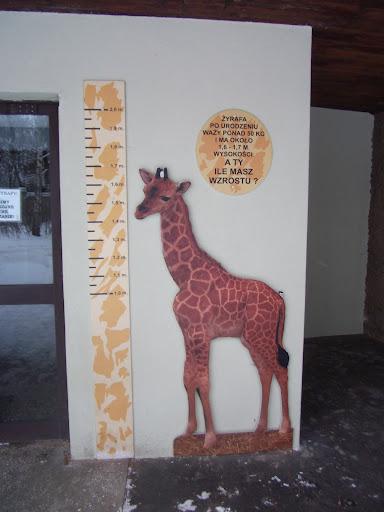 Wejście do żyrafiarni