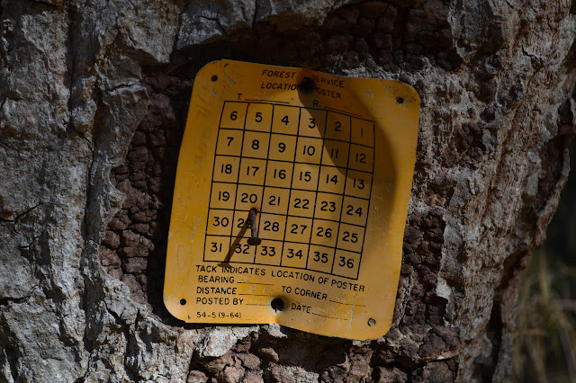 location poster on a bearing tree