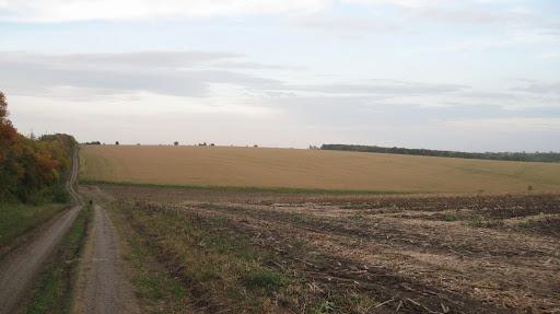 грунтовая дорога к золочевской трассе