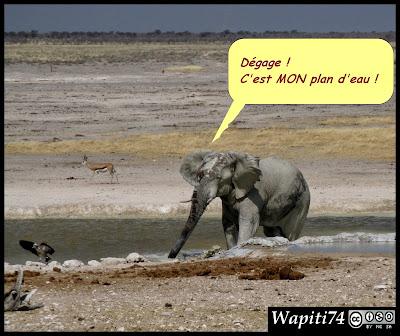 Balade australe... 11 jours en Namibie IMG_0396