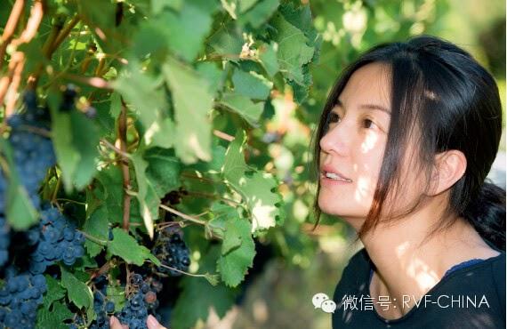 2014.11.27_从明星到庄主:赵薇享受新角色