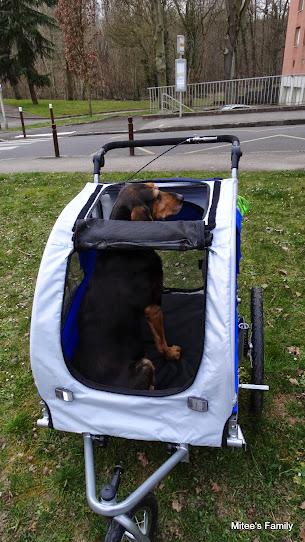 Modes de transport pour petits / vieux chiens qui fatiguent vite - Page 3 DSC02416
