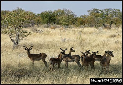 Balade australe... 11 jours en Namibie IMG_0363