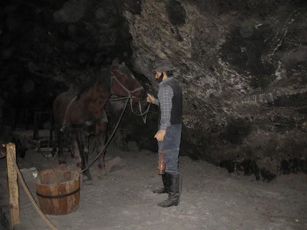 praca koni w kopalniach