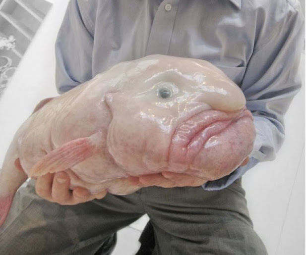 Image of: Ugliest Sadly For This Unusual Animal It Is Endangered The Blobfish Has Been Crowned The ugliest Endangered Animal Here Is Picture Of The Blobfish Shiningnightlight Wordpresscom Some Weird Animals Shiningnightlight
