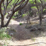 Track through the Melaleuca trees (105814)