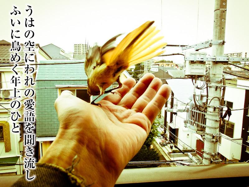 うはの空にわれの愛語を聞き流しふいに鳥めく年上のひと