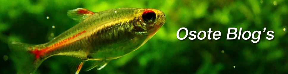 Osote Blog's - Aquascaping