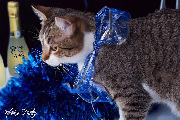 Fidel (Los Aiditos), el Final Feliz de un Gato maravilloso DSC_4272
