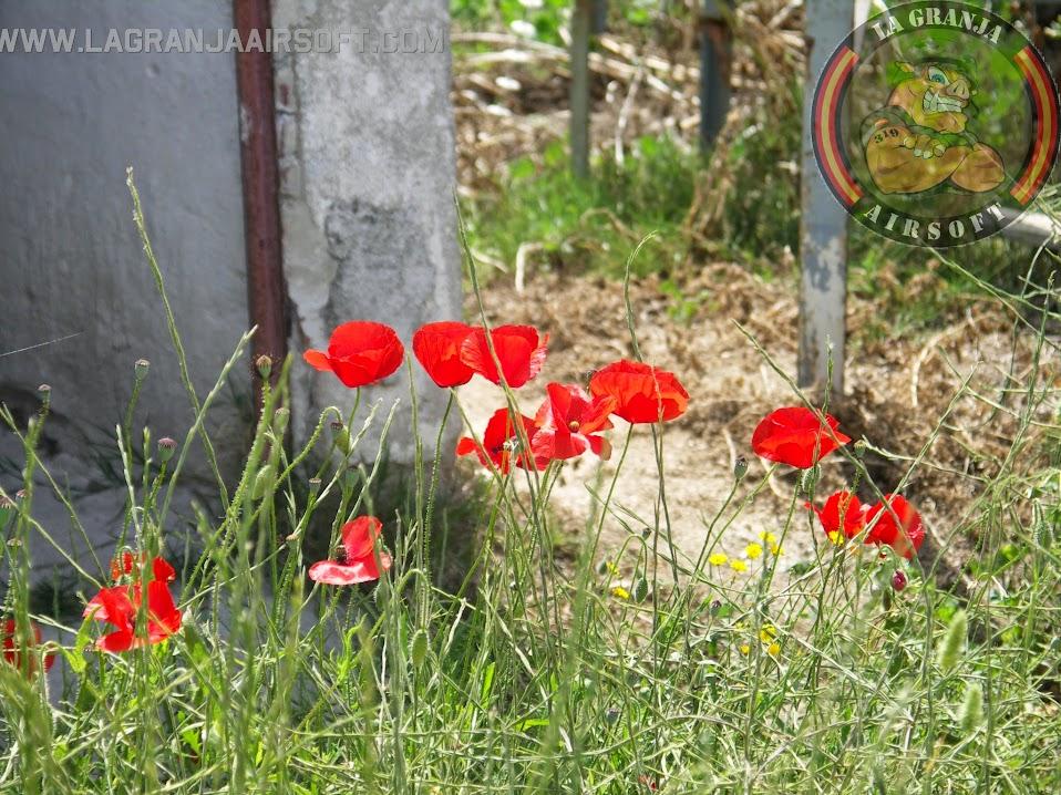 """FOTOS DE """"INCURSIÓN HALO"""". 10-05-15 PICT0241"""
