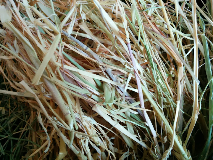 closer look at forage hay