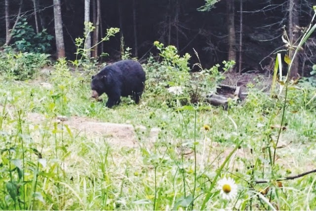 parc national mauricie canada Québec vacances nature lucileinwonderland blog lifestyle voyage paysage canadien observation des ours