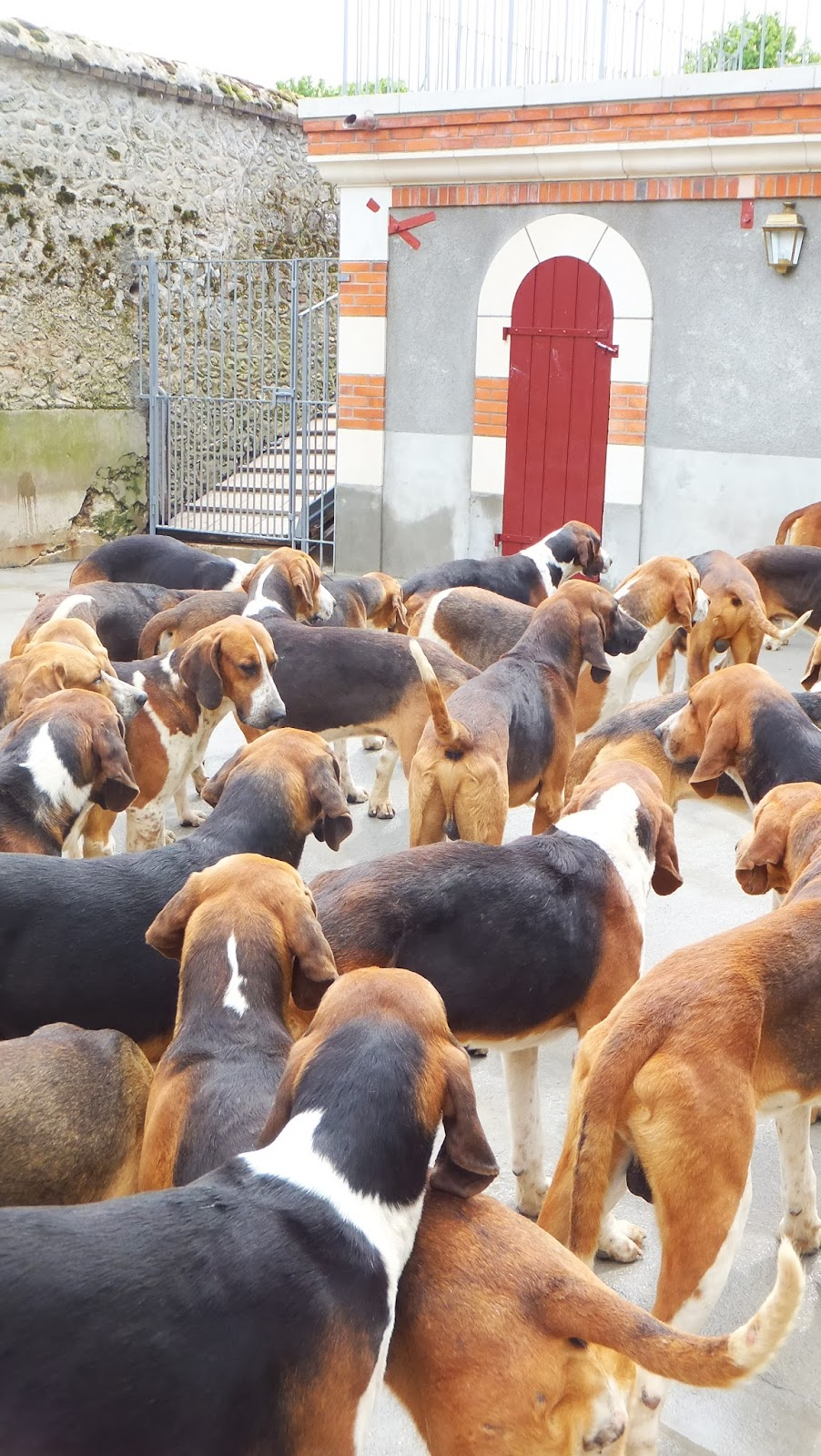 Soupe de chiens, Perros de caza, Cheverny, Francia, Elisa N, Blog de Viajes, Lifestyle, Travel