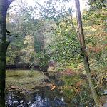 Kleiner Teich am letzten Tag bei Nonnweiler.