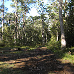 Open area along the Gum trees