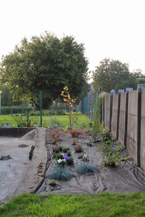 Nouvelle maison dit aussi nouveau jardin... IMG_9531