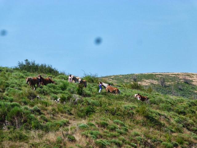 Fête du Haflinger les 16 et 17 aout 2013 a Ajoux (07) P1170014%2520%25281024x768%2529