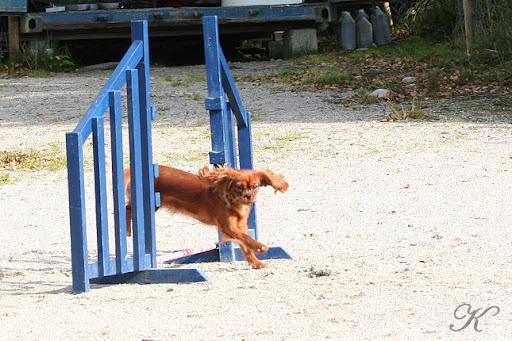 Penny hopper hinder. Foto: Kursdeltakere © K