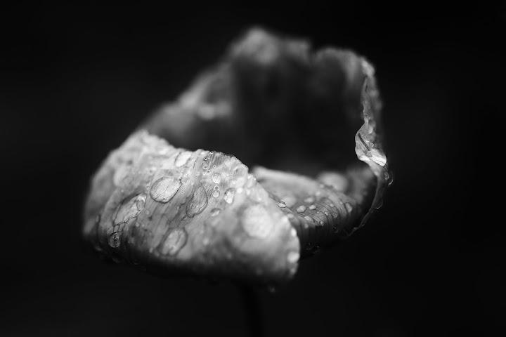 Negru è Biancu  IMG_9810