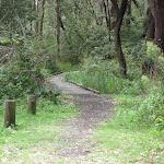Tracks between campsites
