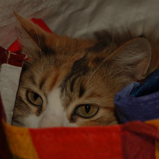 Rita Klein Photo 25