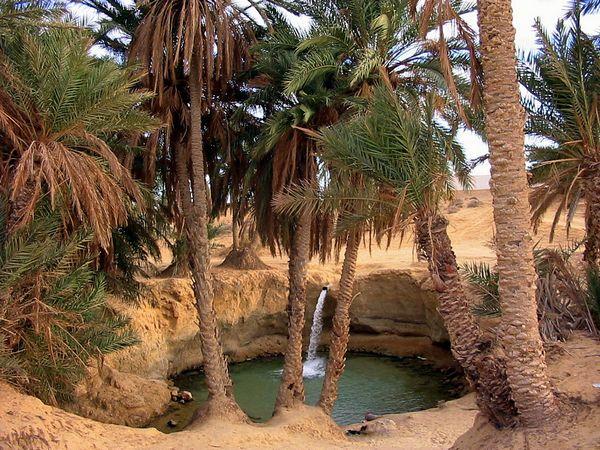 Оазисы в пустыне