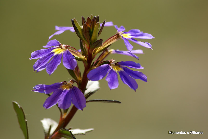 A meia flor