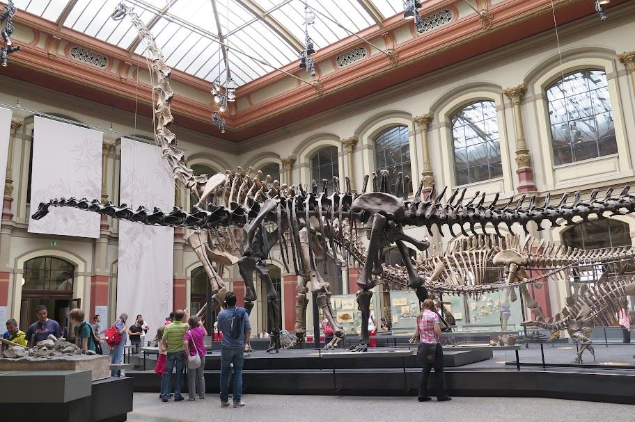 In Berlin ist das weltweit größte Skelett eines Dinosauriers zu sehen