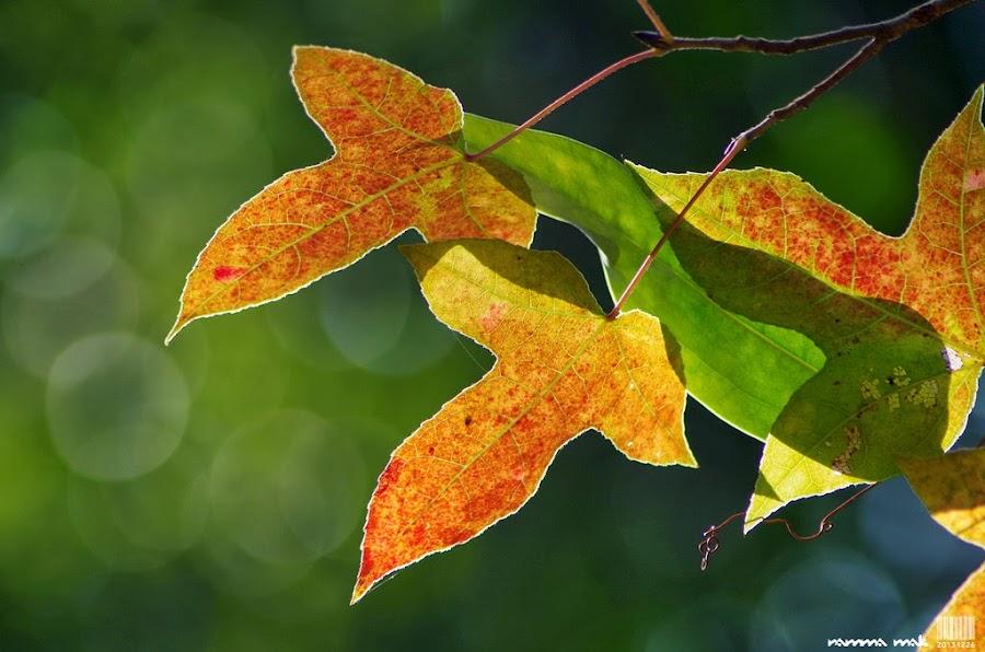 葉脈與葉影最吸引我