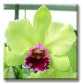 Растения из Тюмени. Краткий обзор - Страница 9 P102_p_t
