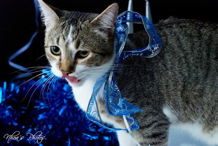 Fidel (Los Aiditos), el Final Feliz de un Gato maravilloso DSC_4276