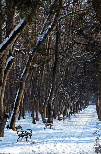 alee parc buzias iarna