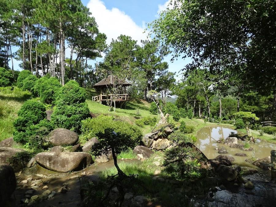 Thung Lũng Vàng Đà Lạt - Dalat News