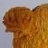 Giedrius Kaleckas's avatar