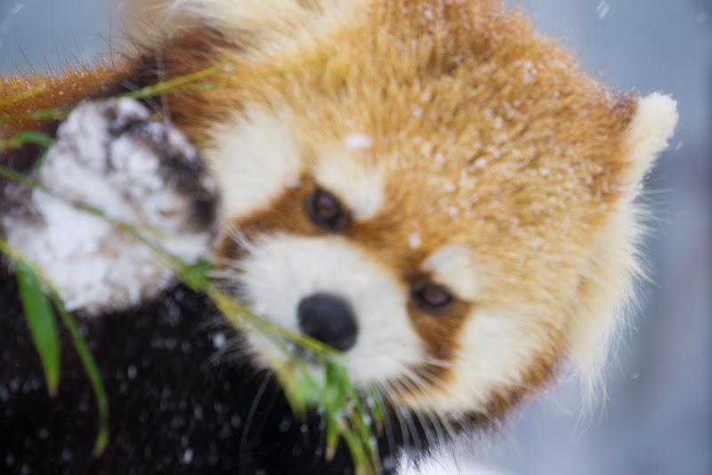 札幌 円山動物園 写真12